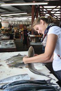 Foodscouting in der Karibik : Fische