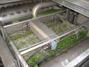 Unsere Spinat-Waschanlage